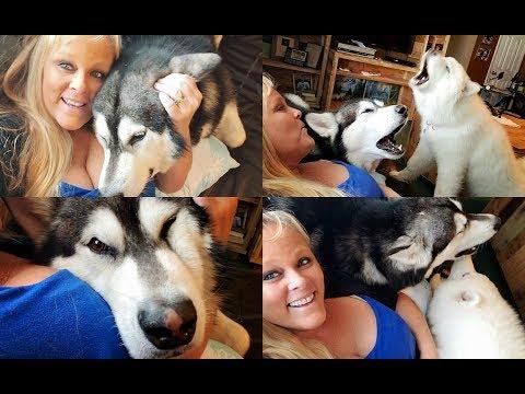 Cuddling & Howling With Tonka & Monroe