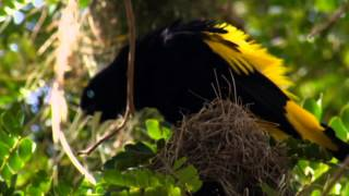 NAT GEO WILD High Quality Mp3 (LIVING MUSIC ACTION) 2012