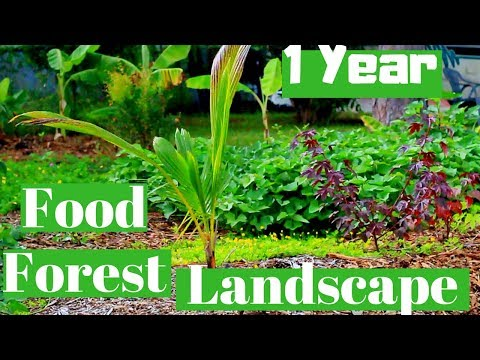 Front Yard Food Forest Landscape | 1 year update