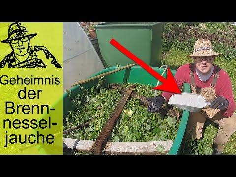 Brennnesseljauche: Bester Dünger für eure Pflanzen