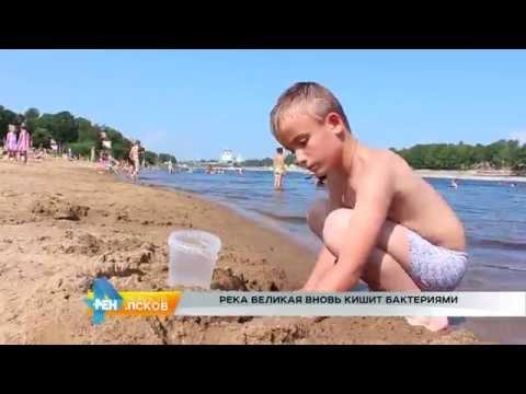 Новости Псков 27.07.2016 # Река Великая вновь кишит бактериями