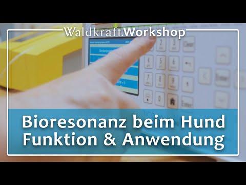 Bioresonanz beim Hund - Funktion und Anwendung | Dirk Schrader