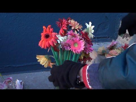 Her knuses blomstene i fillebiter