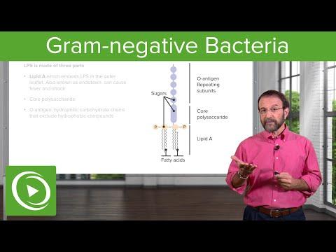 Hpv vaccine laryngeal papilloma
