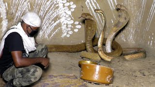 तीन खतरनाक नाग Rescue Three Dangerous Venomous Cobra in one place From: Kenduapada, Bhadrak,Odisha