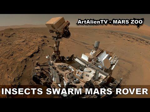 Mars insecten zwerm: UFO's, vogels of vliegen