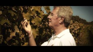 YouTube: Cantine Due Palme Negroamaro del Salento Domiziano