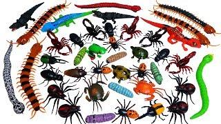 RC곤충 거미 바퀴벌레 뱀 RC공룡 전갈 악어 거북이 개구리 도마뱀 RC동물 장난감