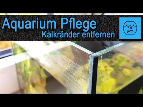 Aquarium Pflege - Kalkränder an Scheiben entfernen - Einfacher Trick zum Aquarium reinigen