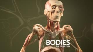 Bodies The Exhibition - Las Vegas