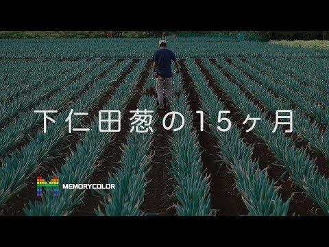 下仁田葱の15ヶ月