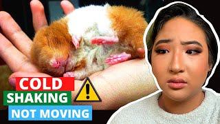 HAVE A DYING HAMSTER? DO THIS NOW! // DIY Emergency Medicine For Rats, Mice, Gerbils + More