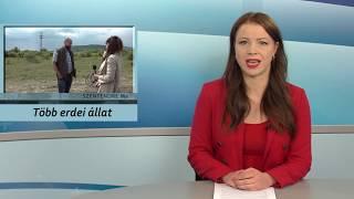 Szentendre Ma / TV Szentendre / 2020.05.29.