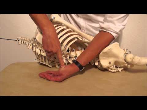 Wenn ich sitzen Rückenschmerzen im Unterbauch