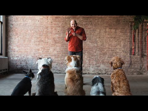 JSDT1 Dog Trainer Certification Course - YouTube