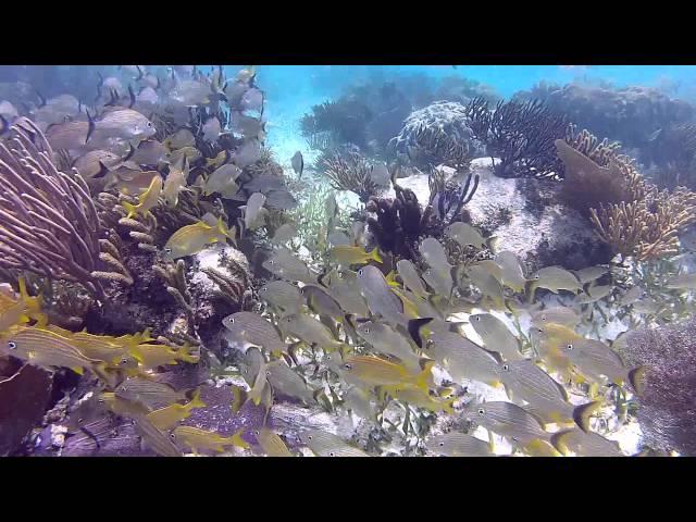 Snorkeling Puerto Morelos, Mayan Riviera, Mexico