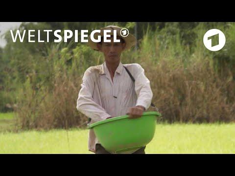 Single party lippstadt