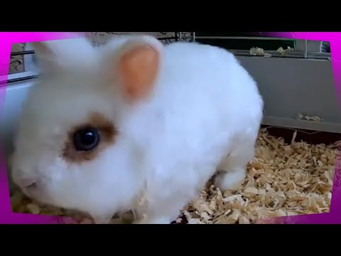 , title : 'How Long Can a Dwarf Rabbit or Dwarf Bunny Live?