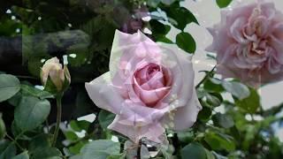 Offene Gärten in Dessau und Anhalt