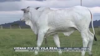 Mhina fiv vri vila real