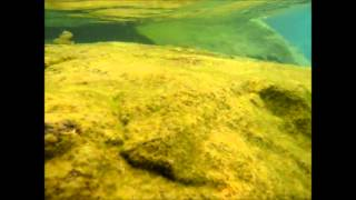 preview picture of video 'Underwater at Chisumulu Island, Lake Malawi, September 2012'
