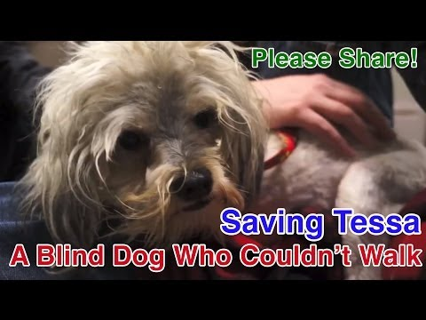 Cứu một chú chó mù cả 2 mắt bị vứt ở bãi rác - Cảm động!