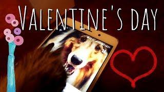 Dog Valentine's Day | Girlfriend Broke His Heart!