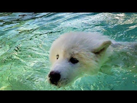 Tonka & Monroe Swim & Play Together 😄😃❣