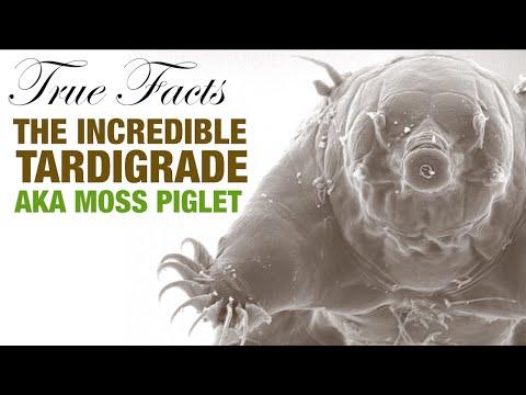 The Incredible Tardigrade