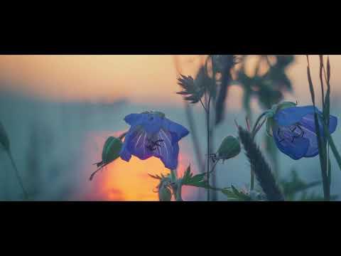 《初投稿》「藍」feat.flower / unlike[official lyric video]