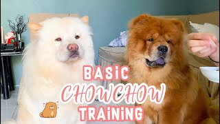 HOW TO TRAIN CHOWCHOW DOGS | BASIC TRAINING FOR CHOWCHOW DOGS