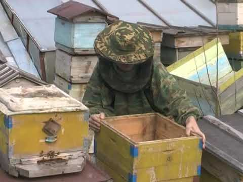 пчеловодство на Алтае