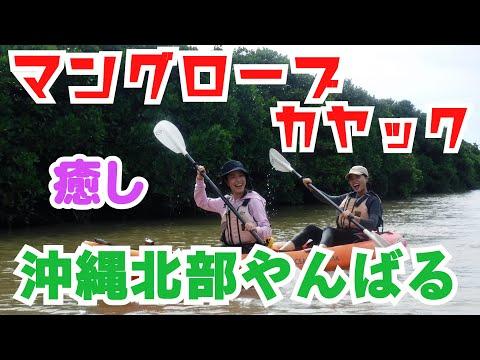 【マングローブ】やんばるの慶佐次川でマングローブカヤック体験!癒しの時間でした