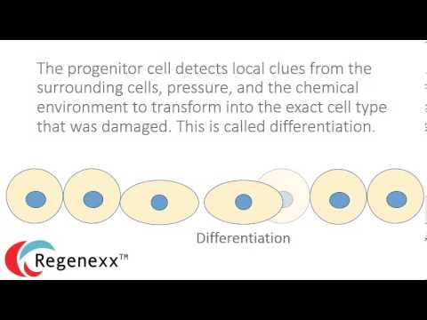 Stem Cell Therapy hqdefault - Let's Talk Stem Cells Part 5: Replacing Dying Cells