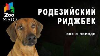Родезийский риджбек - Все о породе собаки | Собака породы - Родезийский риджбек