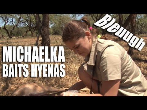 Michaelka baits hyenas