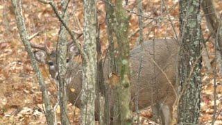 #1 Way NOT to Spook Deer