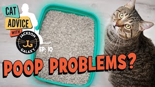 Litter box Problems: Cats covering poop