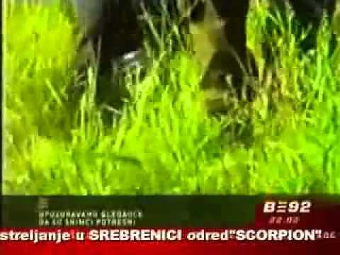 Расстрел в Сребренице мусульман убивавших православных сербов...