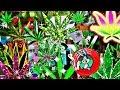 420 - YouTube
