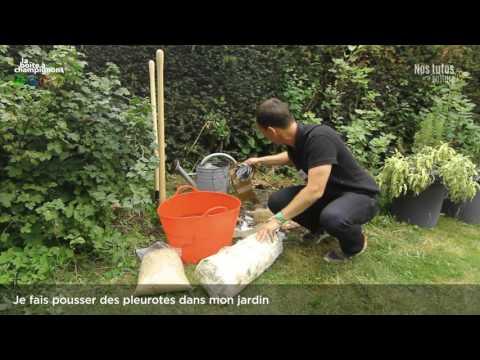 Je fais pousser des pleurotes dans mon jardin