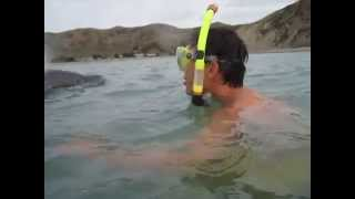 preview picture of video 'First contact with Moko the Dolphin'