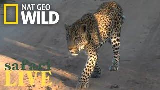 Safari Live - Day 144 | Nat Geo Wild