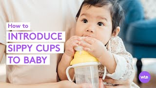 When Can Babies Use a Sippy Cup? Transition Tips + More! = What to Expect