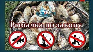 Сколько рыбы можно поймать на удочку