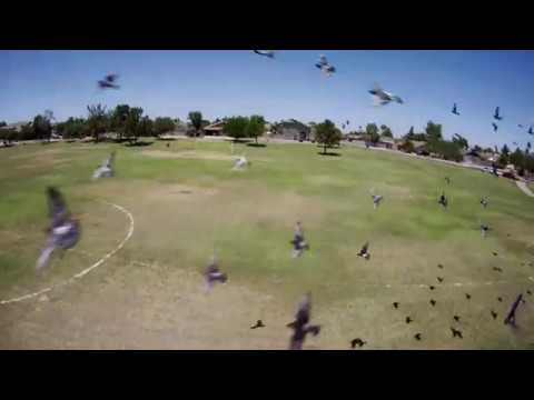 Flight Cinebee 4k - FPV 4k Park Flight Slow Motion Edit
