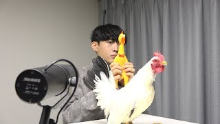 Toto   Africa ( Chicken Cover )