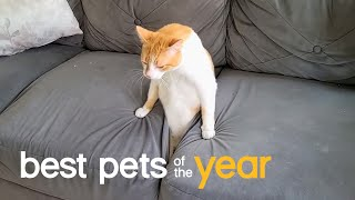 Best Pets of the Year...So Far (2021)