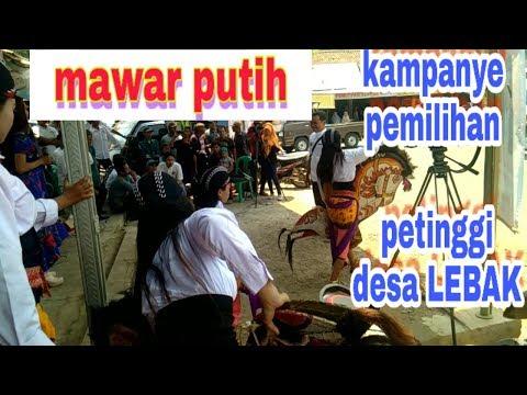 MAWAR PUTIH  kampanye pemilihan petinggi desa lebak NO. 1 Bp. AMIN