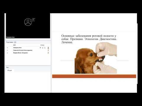 Основные заболевания ротовой полости у собак. Признаки. Этиология. Диагностика. Лечение.